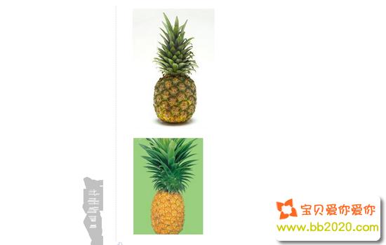 凤梨和菠萝区别在哪里?两者的鉴别方法第1张