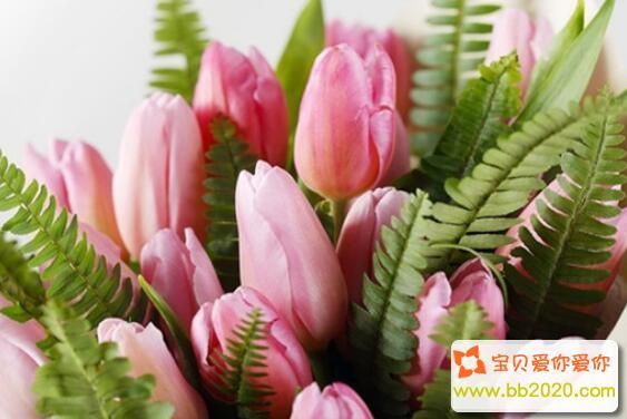 郁金香的朵数与花语寓意是什么第1张