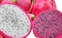 红心火龙果与白心火龙果的区别有哪些