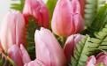郁金香的朵数与花语寓意是什么